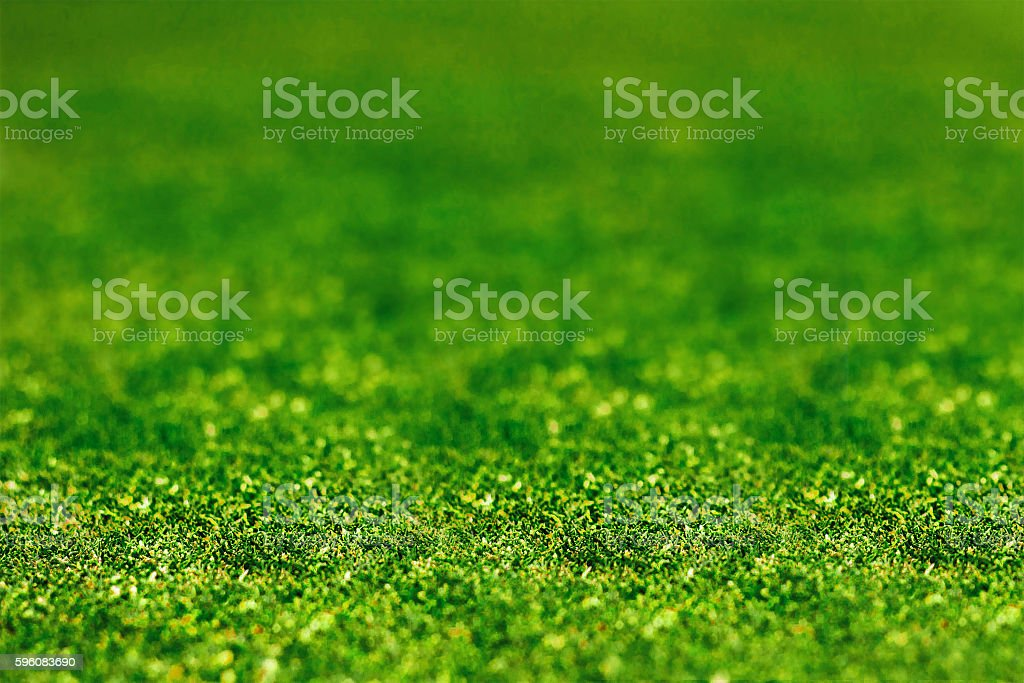 grass close up royalty-free stock photo