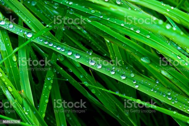Photo of Grass Close Up with Rain Drops