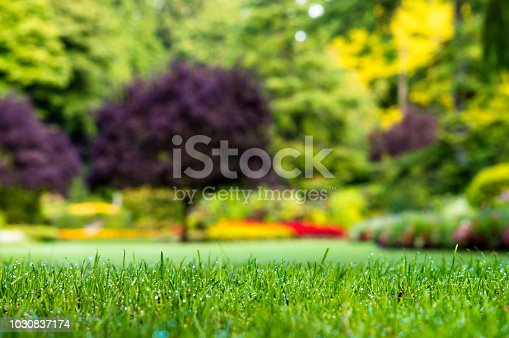 Green grass closeup at the garden, blur tree at backgrounds