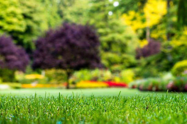 close-up van het gras in de tuin - laag camerastandpunt stockfoto's en -beelden