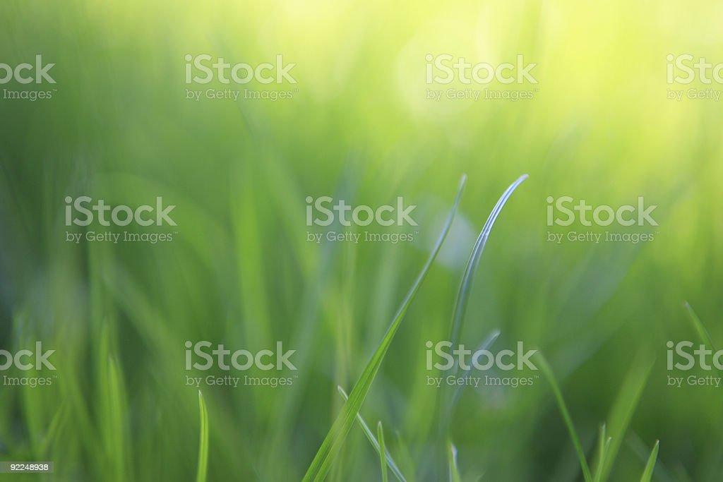 Grass close-up royalty-free stock photo