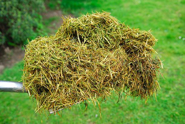 Gras Kompost. – Foto
