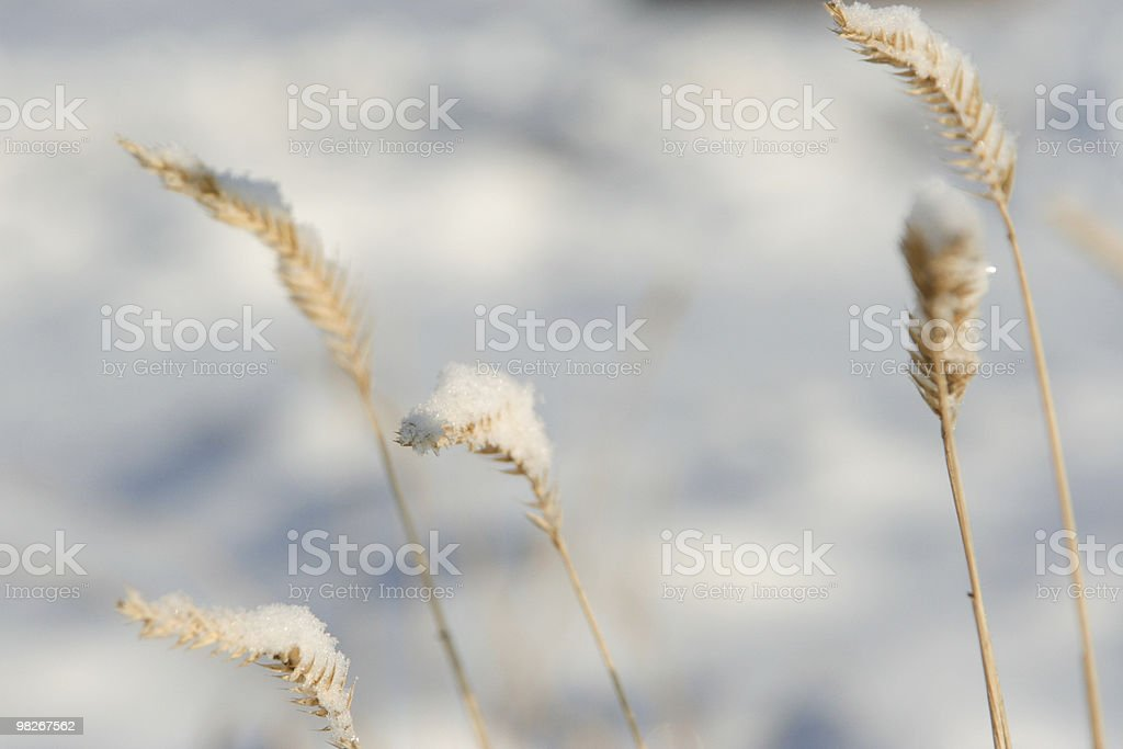 Erba coperto in neve primo piano foto stock royalty-free