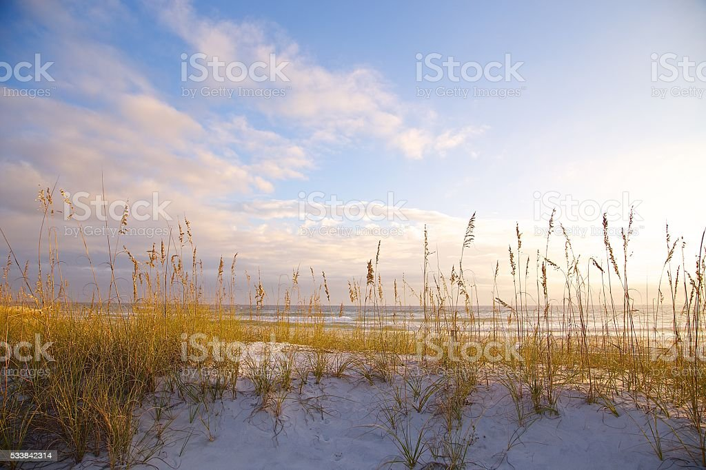 Grass Covered Sand Dunes stock photo