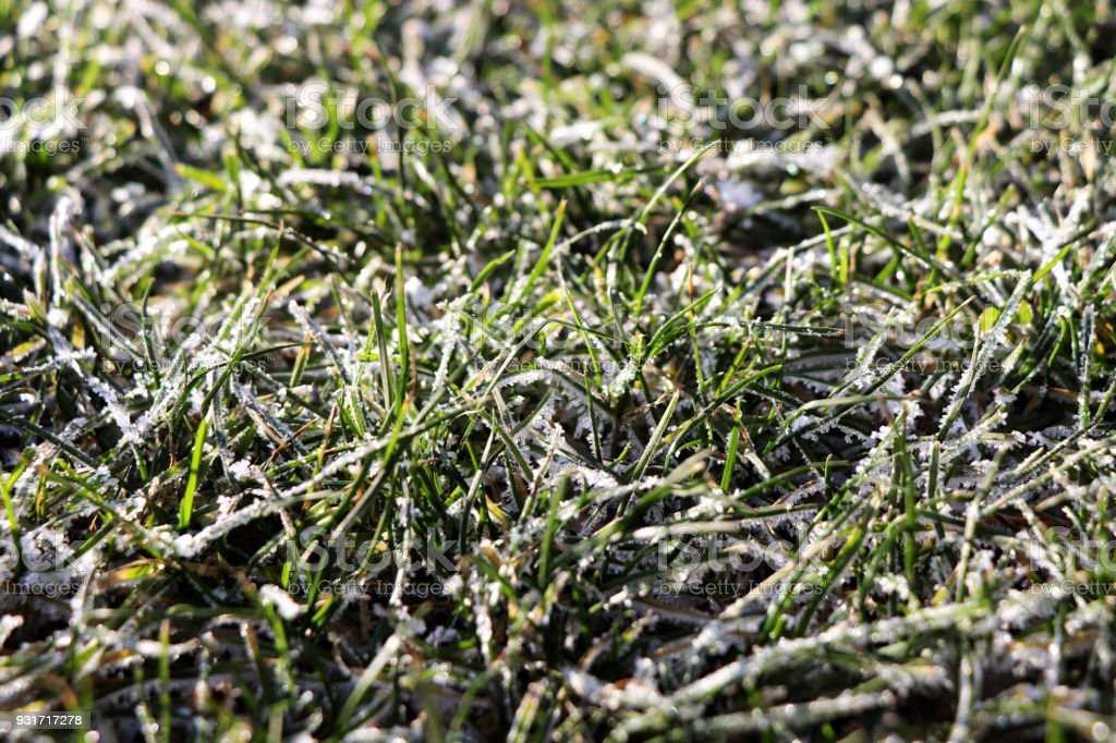 A grass covered with snow in the morning stock photo