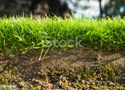 A macro cross-section view of grass and soil.