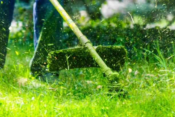 grass cutting in the garden stock photo