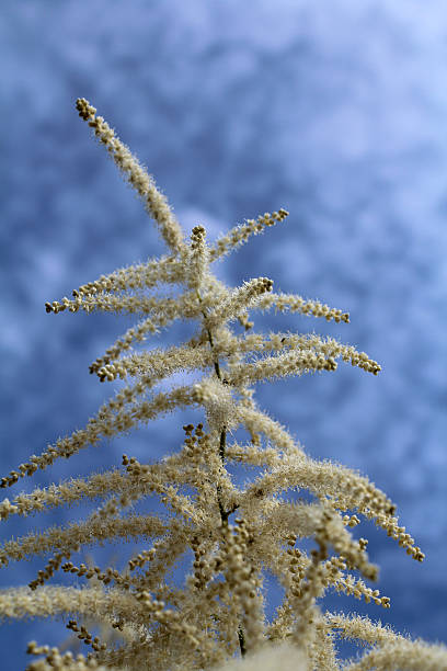 grass depicted grass against the sky abjure stock pictures, royalty-free photos & images