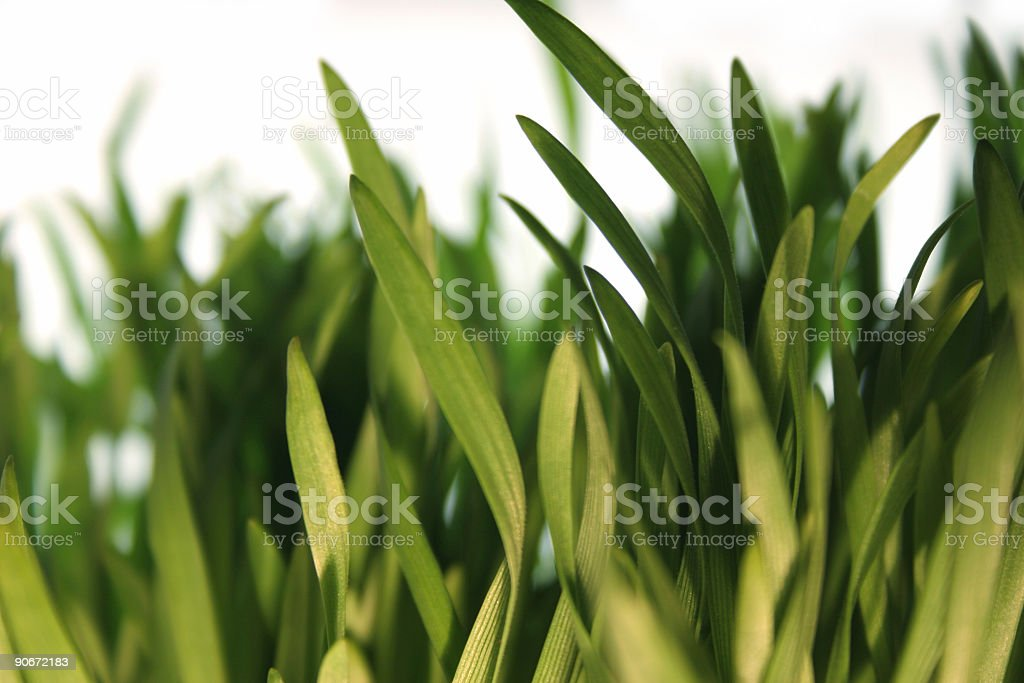 grass detail royalty-free stock photo