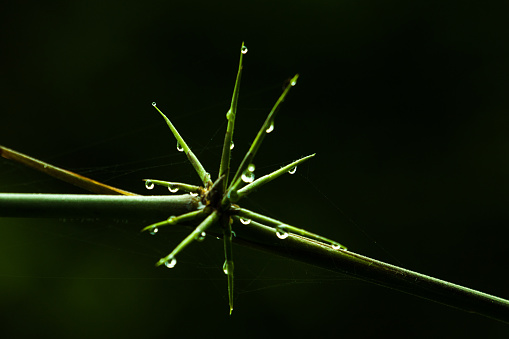 Grass, dew and drops