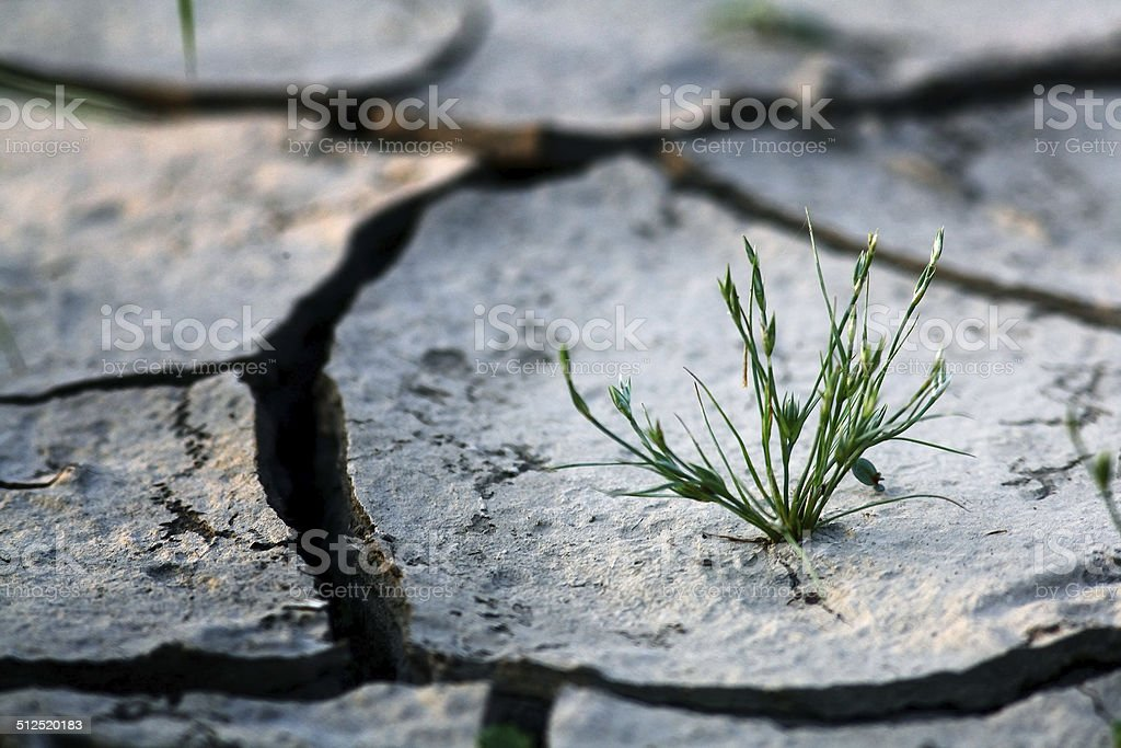 grass, dry, cracked earth, hunger stock photo