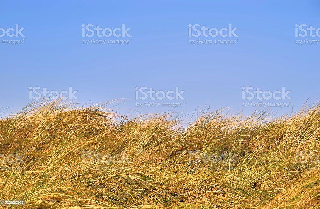 Grass dunes against a blue sky stock photo
