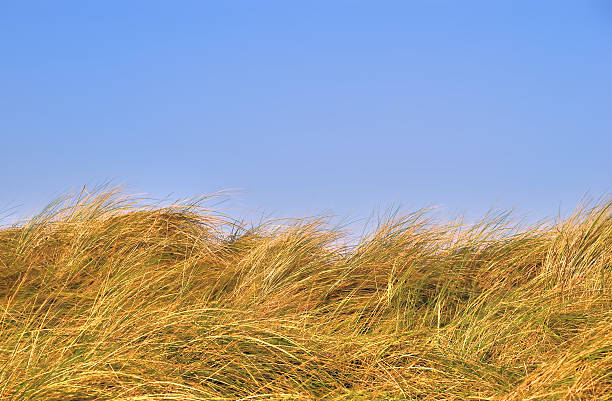 Grass dunes against a blue sky stock photo