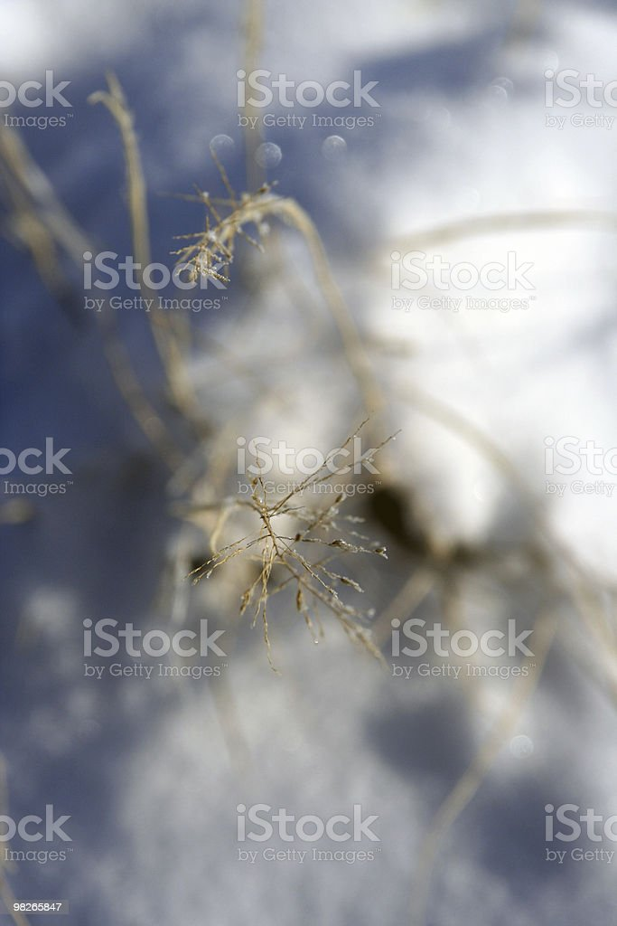 Grass elements in winter royalty-free stock photo
