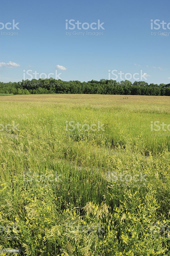 Grass Field and Line of Trees Landscape royalty-free stock photo