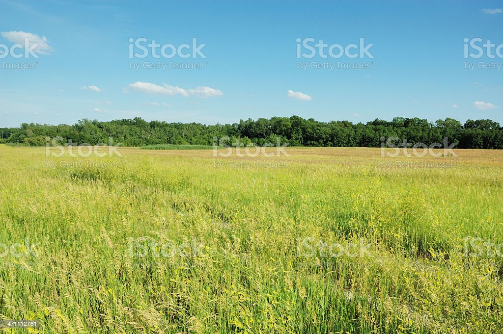 Grass Field and Line of Trees Landscape stock photo
