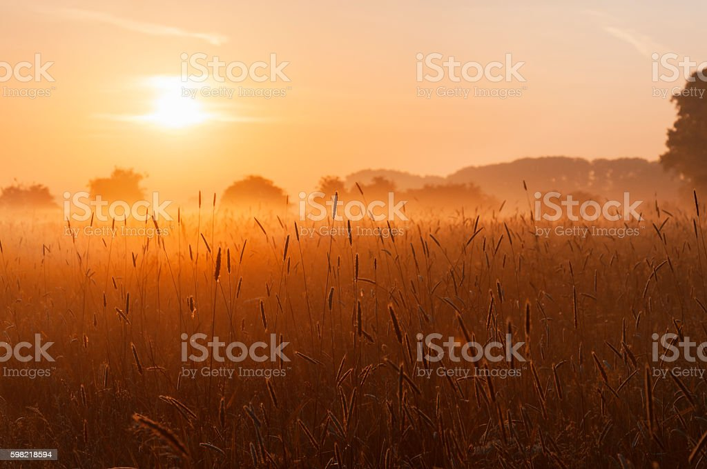 Grass field at sunrise foto royalty-free