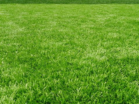 Soccer Ball, Lawn, Ball, Flooring, Land