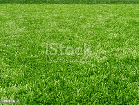 Soccer Ball, Lawn, Ball, Flooring, Land