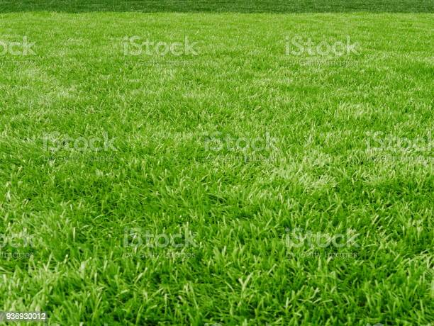 Grass field for football sport picture id936930012?b=1&k=6&m=936930012&s=612x612&h=vu6udufhy0iqohiuaitpgxhdrotbcnflzpw9jtm0ymy=