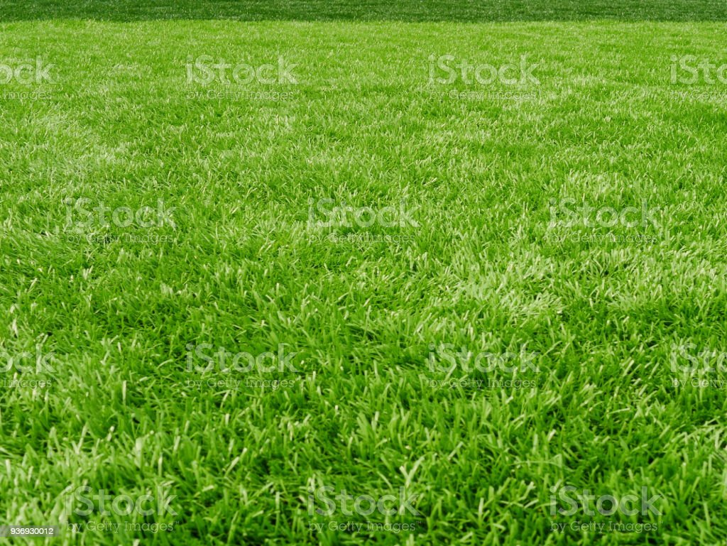 Rasenplatz für Fußball sport – Foto