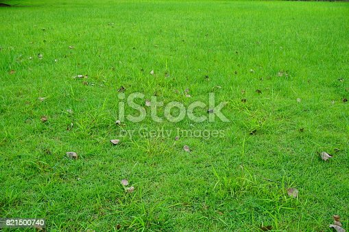 474672896 istock photo Grass Field in public park 821500740