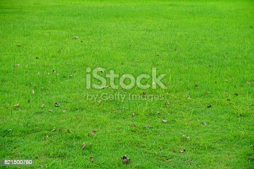 474672896 istock photo Grass Field in public park 821500760