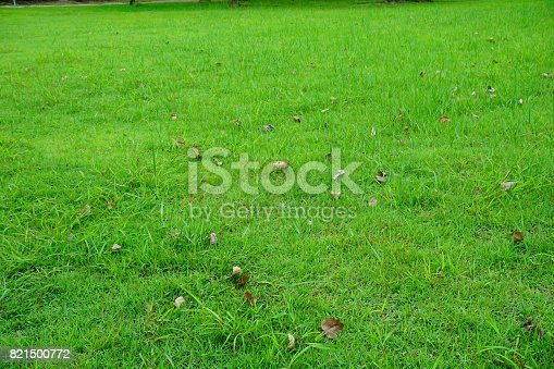 474672896 istock photo Grass Field in public park 821500772