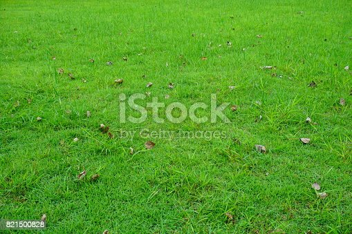 474672896 istock photo Grass Field in public park 821500828