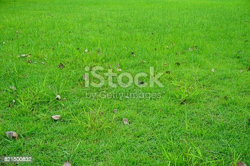 474672896 istock photo Grass Field in public park 821500832