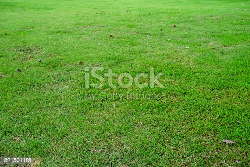 474672896 istock photo Grass Field in public park 821501188