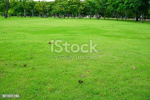 474672896 istock photo Grass Field in public park 821501190