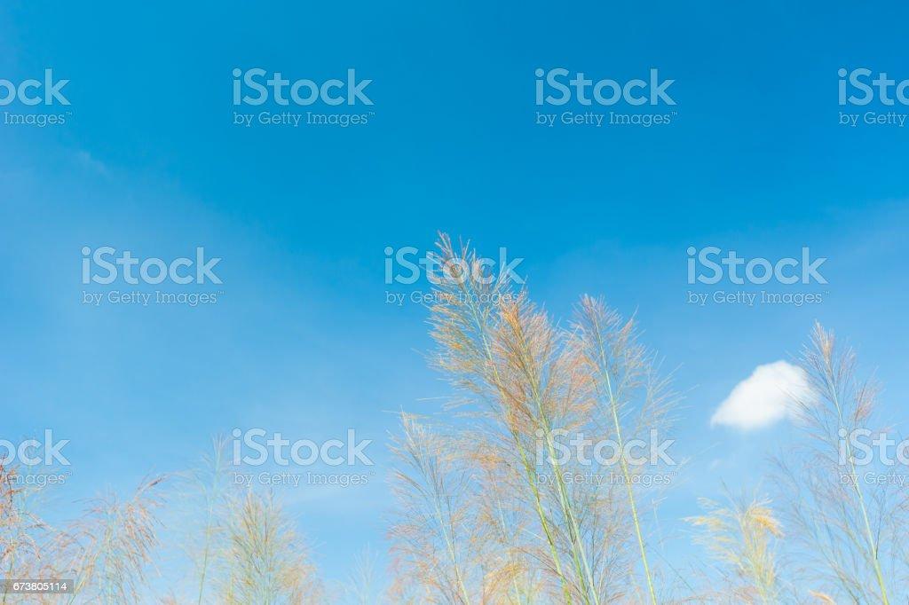 Grass field landscape in nature ,with blue sky photo libre de droits