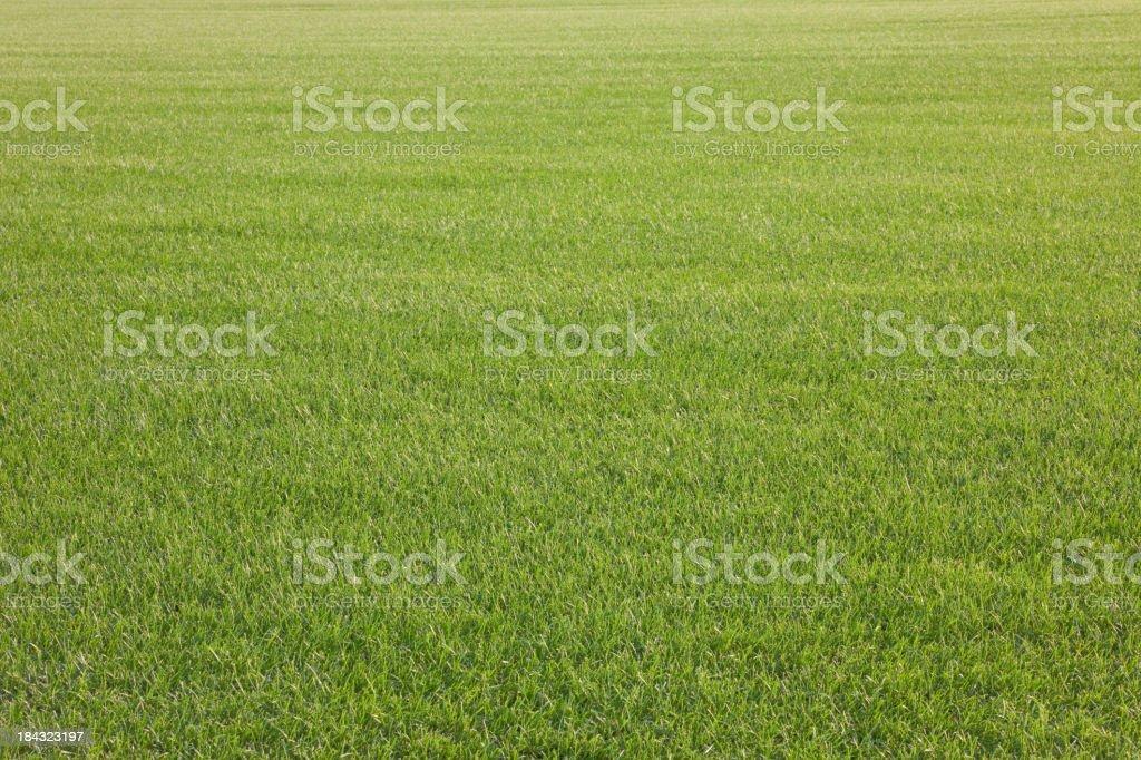 grass field. Grass Field Stock Photo R