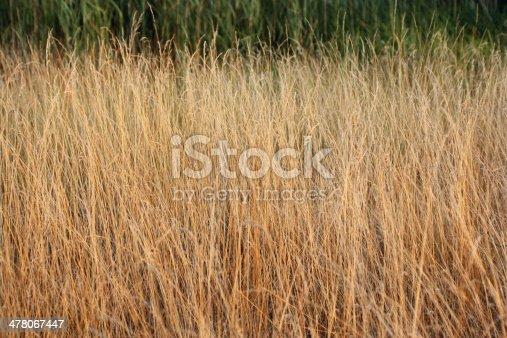 Grass field landscape