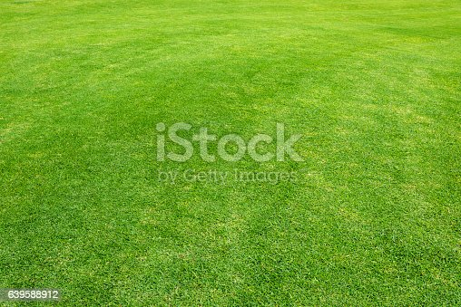 Grass from golf course in Kenya.