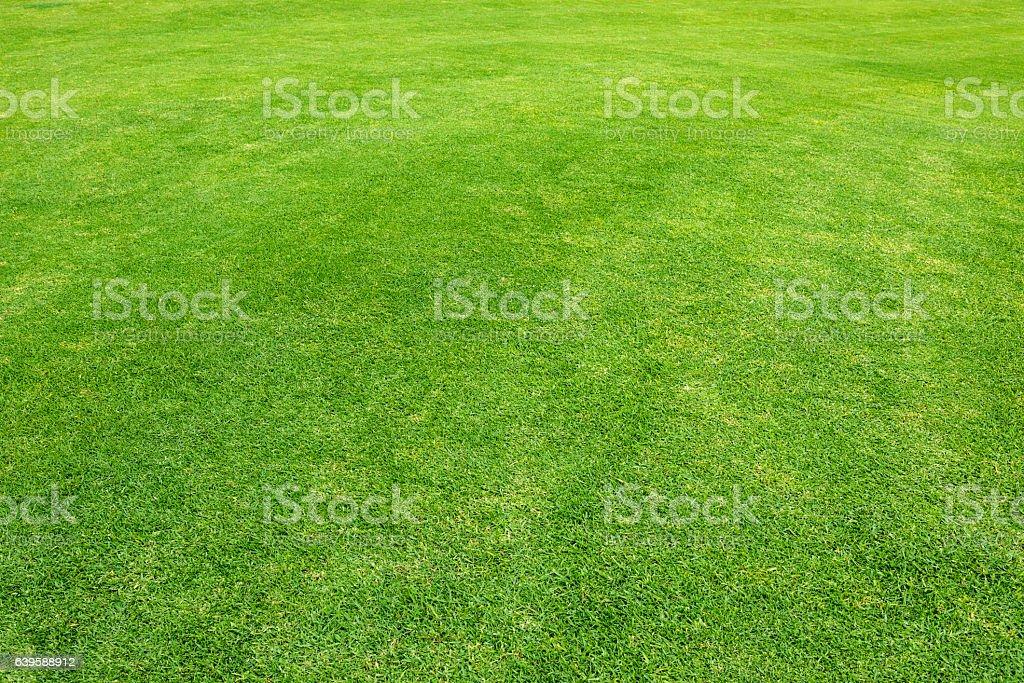 Grass Field  - foto de stock