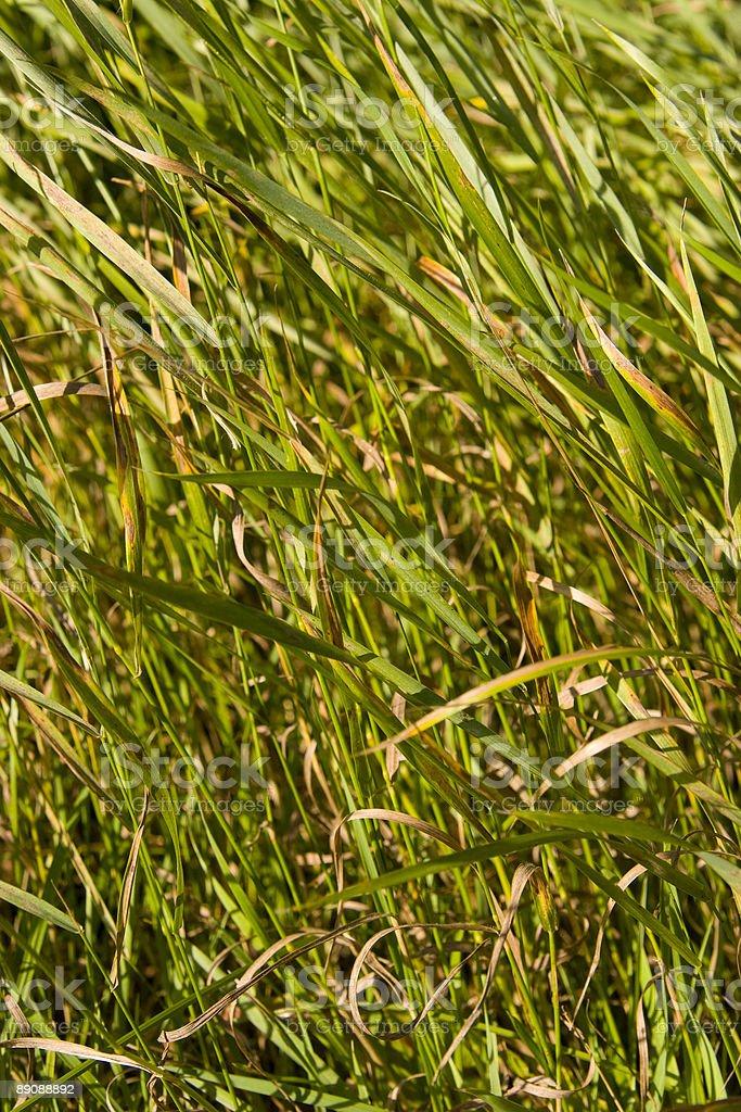 Grass Field foto de stock libre de derechos