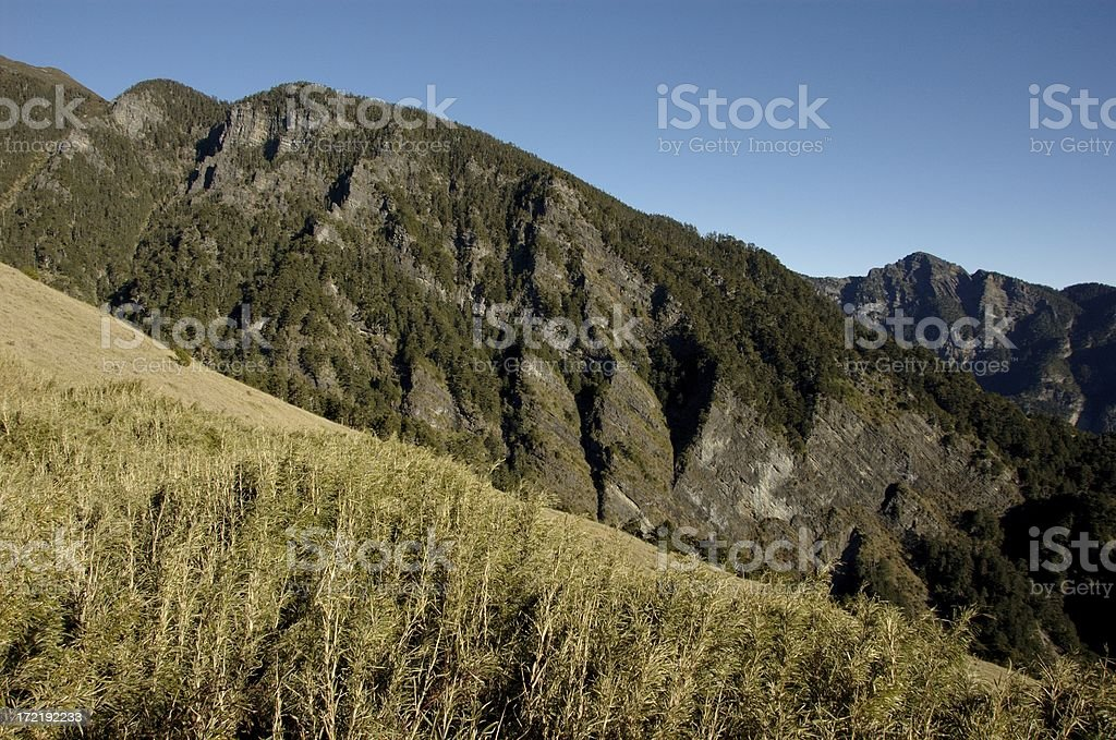 Grass Field @ SyueShan (Taiwan Central Mountain Range) stock photo