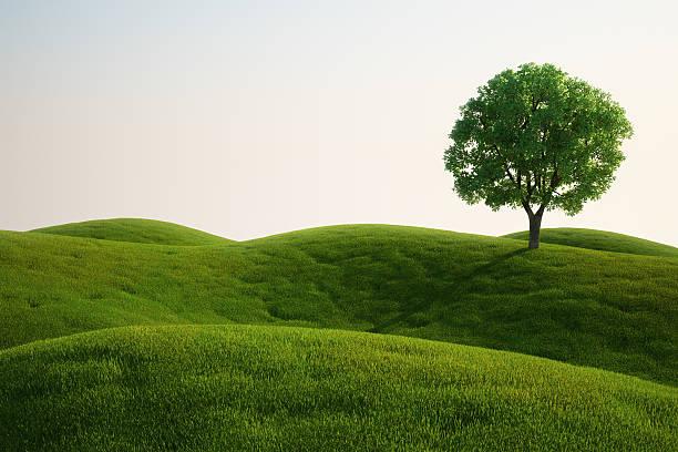 Grass field mit einem Baum – Foto