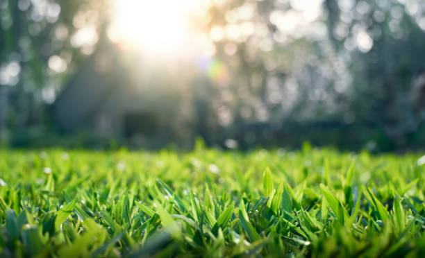 Grass field with depth of field stock photo