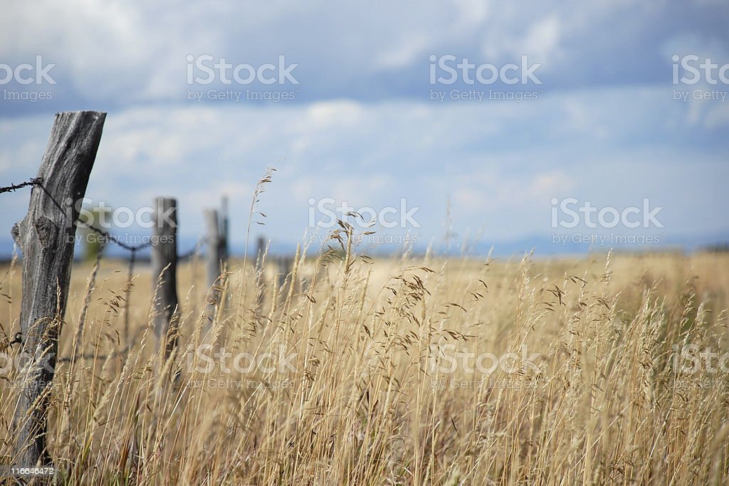 Grass Field with Fence Post royalty-free stock photo
