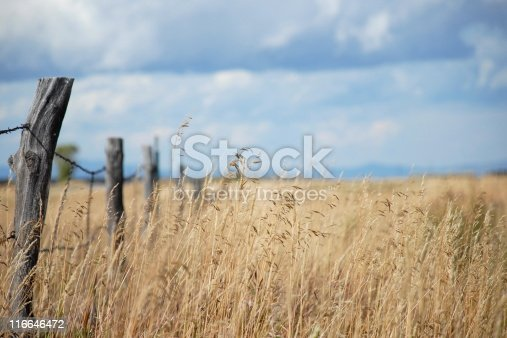 Grass field with a disappearing fenceline emphasized by a shallow DOF.  Good copyspace.