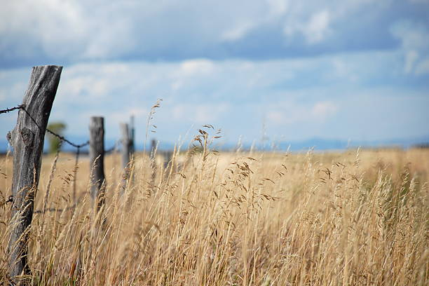 Grass Field with Fence Post stock photo