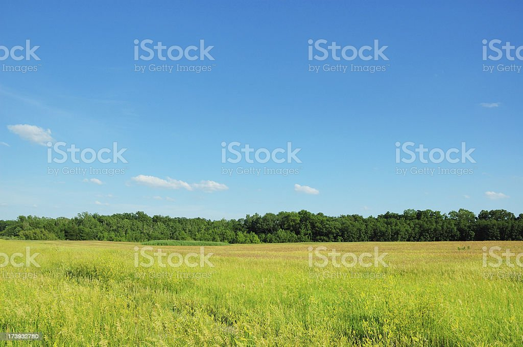 Grass Field with Trees and Blue Sky stock photo