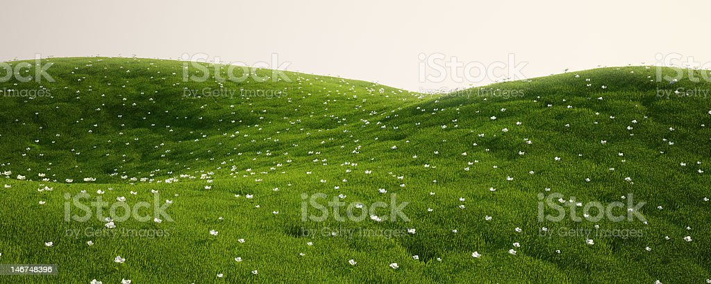 Grass field with white flowers royalty-free stock photo