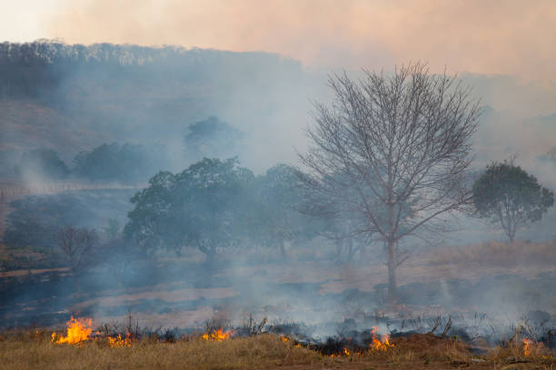 Grass Fire in Tocantis, Brazil stock photo