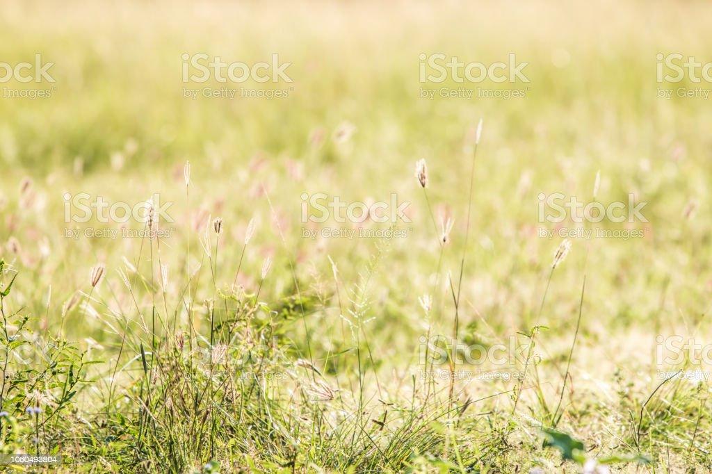 Grass Blumen- und Sonnenlicht – Foto