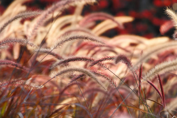 Grass flower background stock photo