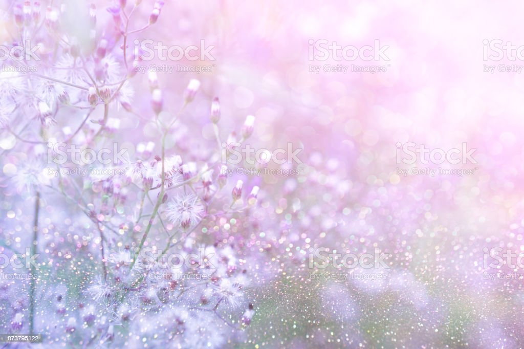 grass flower field in spring background with sunlight in purple pastel tone stock photo